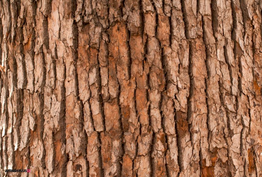 تنه درخت