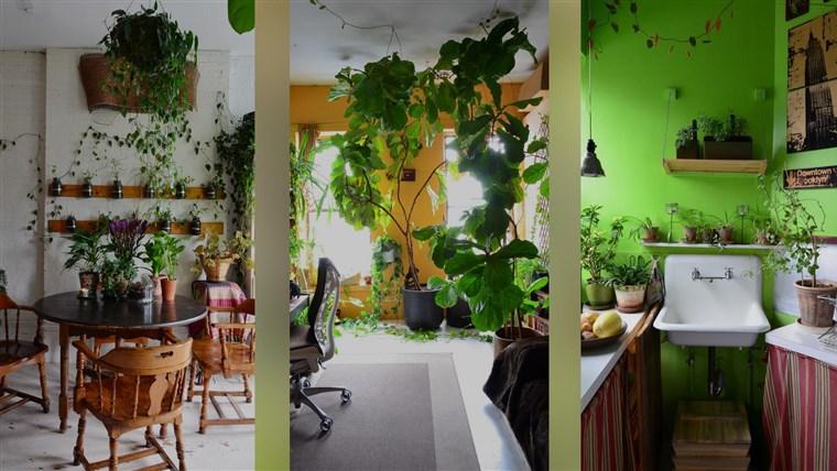 سه تصویر تزیین شده با گل. شماره یک آشپزخانه ای کوچک با دیوارهای سبز و سینک کوچک. شماره دو اتاث خوابی پر از گیاهان سبز بزرگ و دو پنجره.شماره 3 اتاق غذاخوری با گیاهان نصب شده آویزان به دیوار