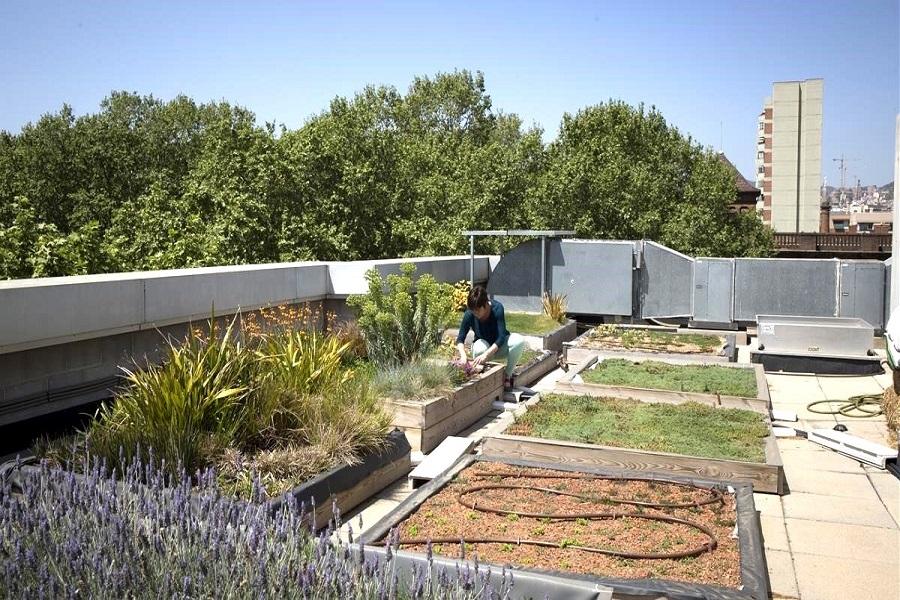 خاک ریزی مناسب برای روف گاردن بام باغ