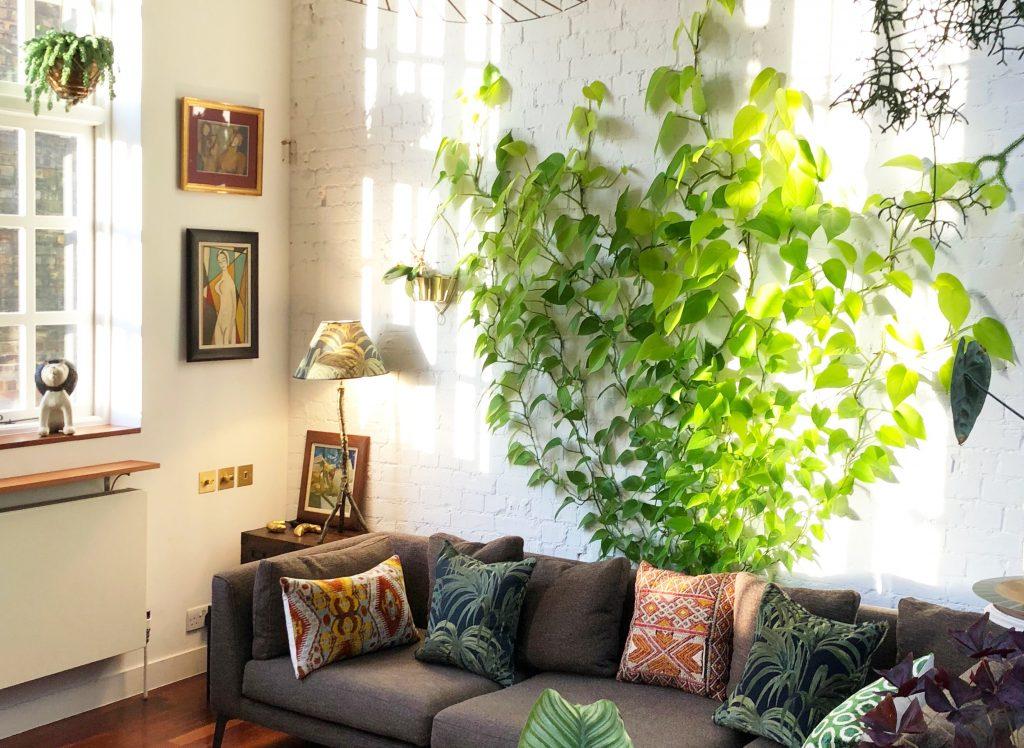گیاه رونده پوتوس روی یک دیوار طرح اجری سفید پشت یک مبل راحتی طوسی رنگ و تعدادی قاب عکس روی دیوار.