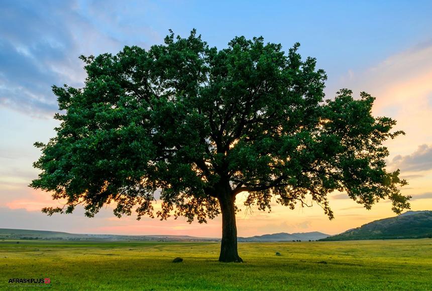 درخت تنها بر روی چمنزار در منظره افق