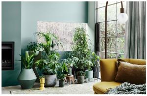 گیاهان سبز در دکوراسیون